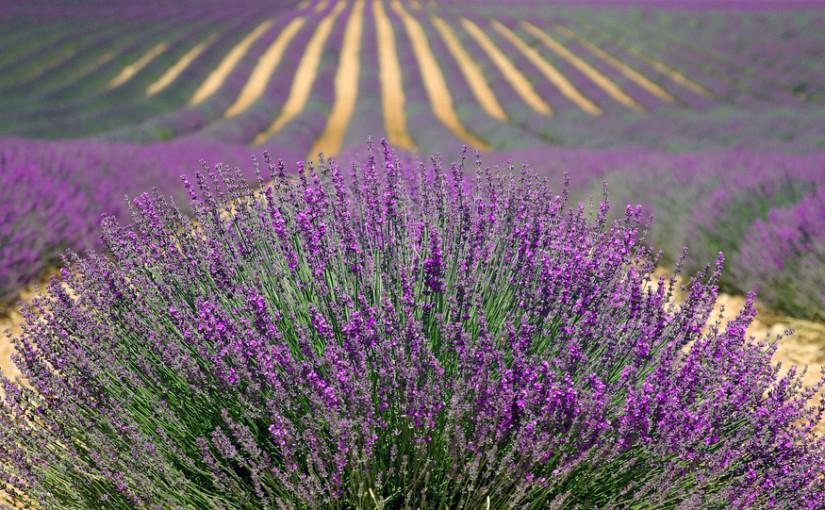 La Provence est le plus bel endroit du monde